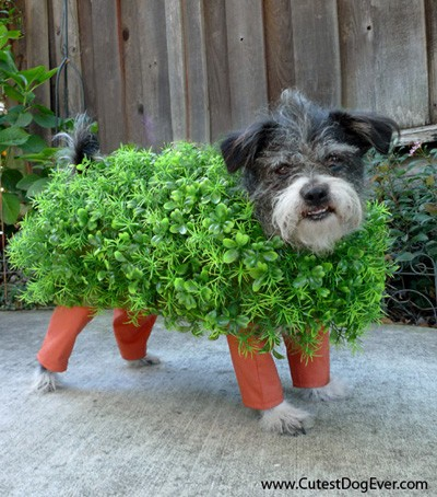 Chia Pet Halloween Dog Costume